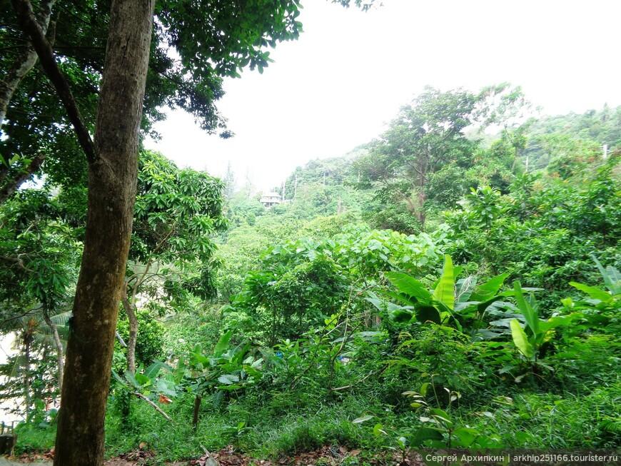 Вокруг была тропическая растительность