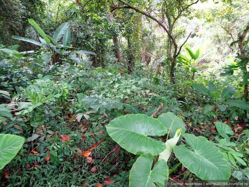 Тропическая растительность у пляжа Лаем Синг