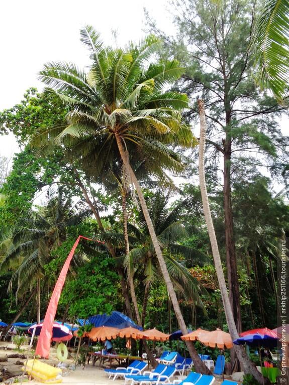 Пальмы на пляже Лаем Синг