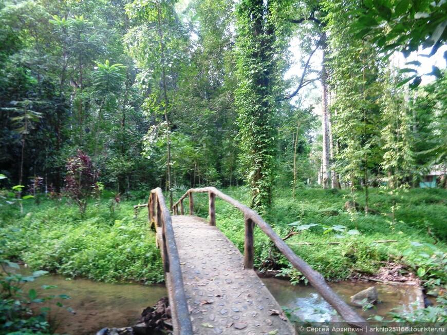 Пройдя через этот мостик я сразу оказался в тропическом лесу.