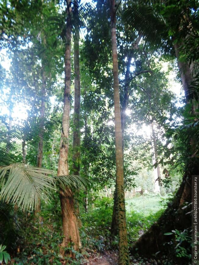 Национальный парк Бенча