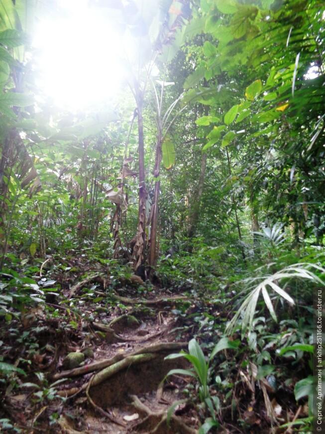 Национальный парк Бенча (Южный Таиланд)
