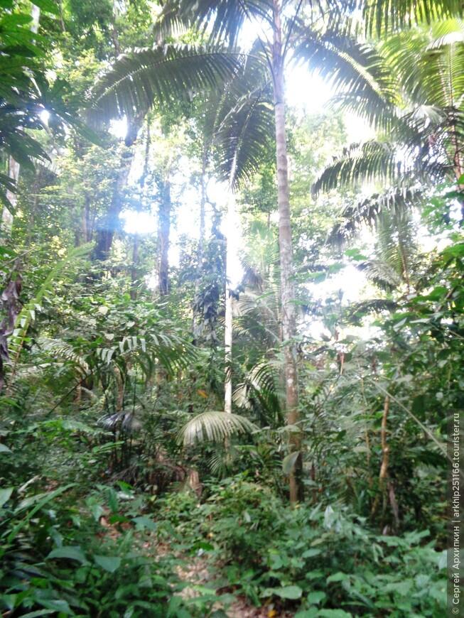 Национальный парк Бенча в Южном Таиланде