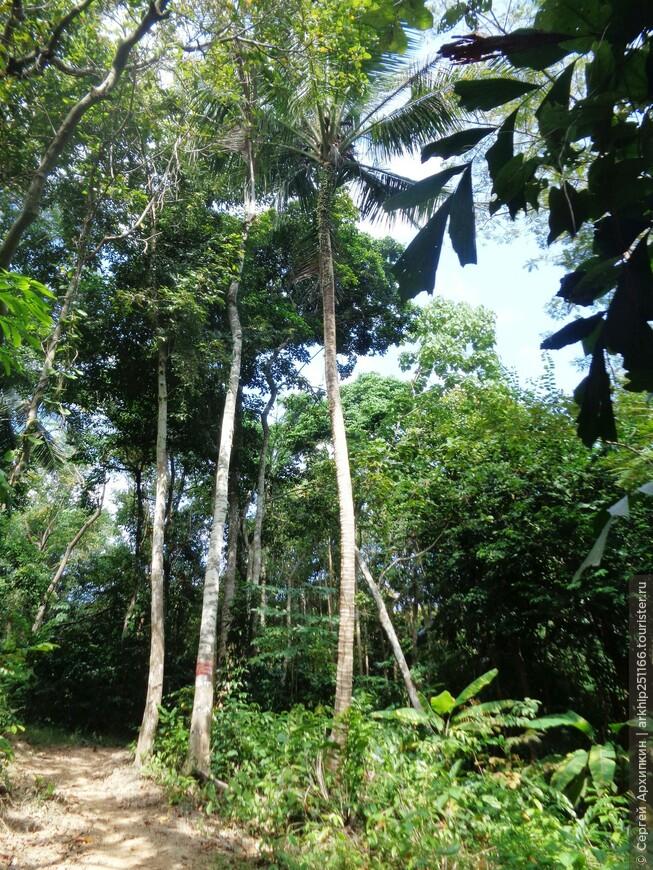 Да и интересно было прогуляться по тропическому лесу в последний день уходящего года