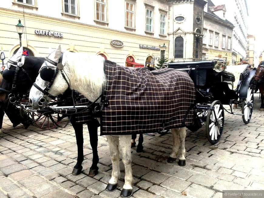 Неизменное украшение Венских улиц - её конные экипажи