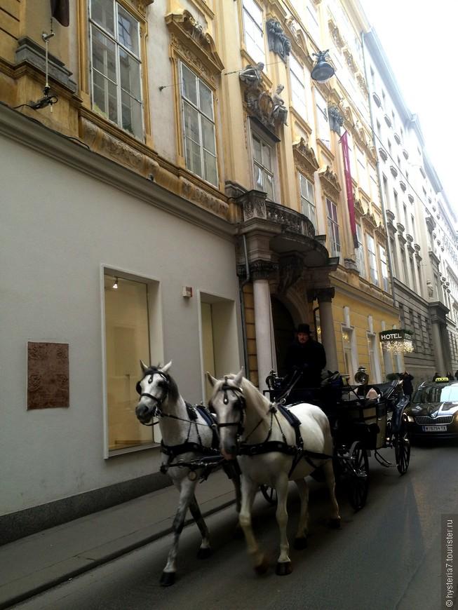 Какие гордые они, эти Венские лошадки!