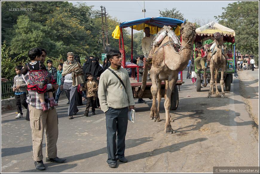 Нравится мне наблюдать, во что одеты индийцы. Это какая-то эклектичная смесь западной и восточной одежды. Вот товарищ на заднем плане вроде и в костюм одет. Но сверху - накидка в местном стиле. Кстати, в декабре на севере Индии довольно прохладно, особенно ночами, когда все греются у костров.
