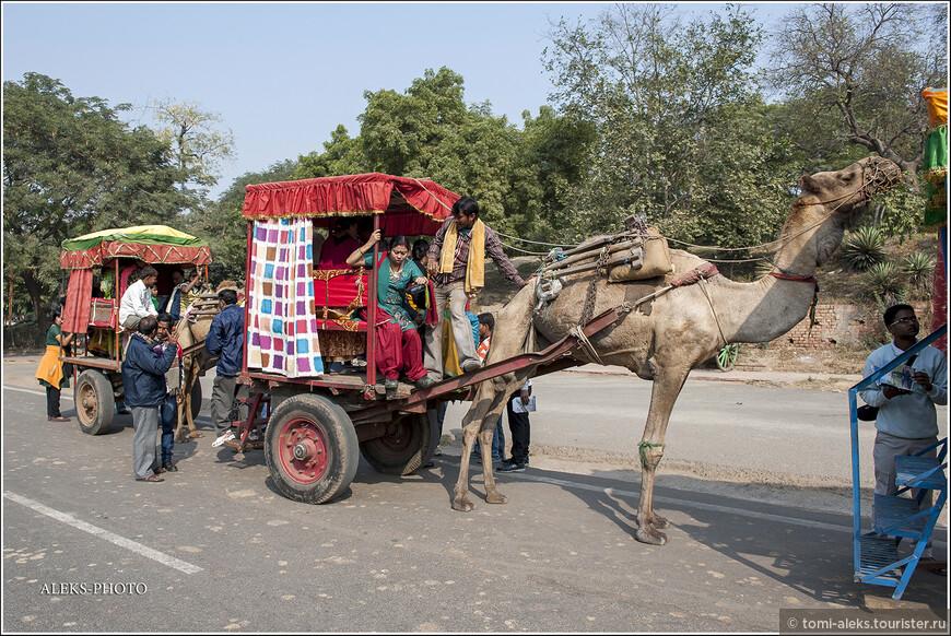 В повозки залезают по ступенькам сзади и рассаживаются на скамейки. В общем, это, своего рода, аттракцион по-индийски. Интересно, что верблюды приспособлены для условий, где очень мало воды. Они обычно выпивают 60-100 литров за раз. И этого запаса им хватает на две недели. В Агре, конечно, воды в достатке - река Джамна (Ямуна) всегда под рукой.