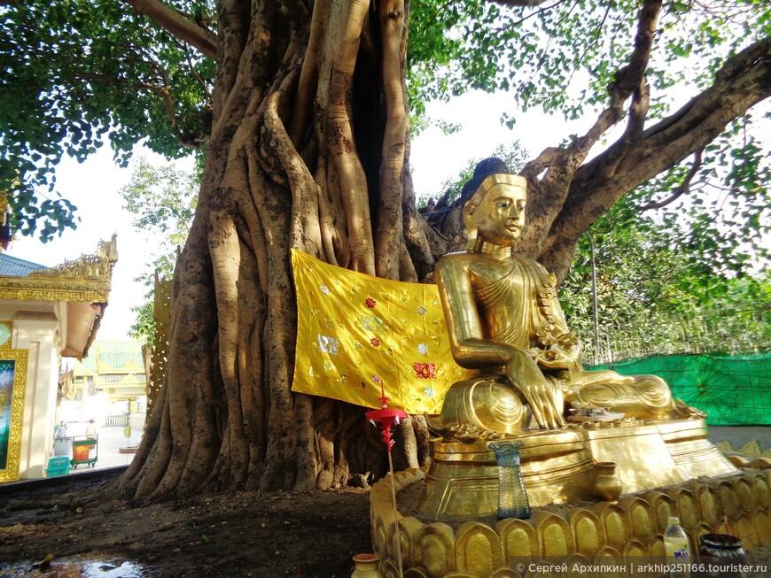 Дерево Будды в Шведагоне