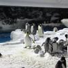 Встреча с пингвинами (Pinguin Encounter) - это огромный павильон с пингвинами