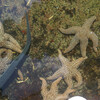 Морские звёзды, змеи и прочие рыбки - и всех можно рассмотреть, а некоторых и потрогать руками
