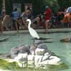 Белый аист спокойно наблюдает за смехом и игрой со скатами детишек и их родителей