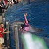 Дельфины приветствуют зрителей и особенно детишек