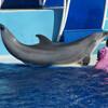 Вот он красавец - артист невероятного шоу с дельфинами в Sea Word