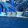 Шоу с дельфинами в парке Морской Мир в Сан-Диего