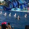 Дельфины прощаются под бурные аплодисменты зрителей