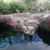Пигвины в парке Морской Мир