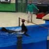 Спортивные соревнования среди морских котиков и тюленей