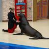 Удивительный танец Кармен с морским котиком