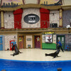 Жизнь Морских Котиков (Sea Lions Live) - красочное представление с морскими котиками, тюленями, моржами и им подобными