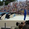 Крупные китообразные касатки весом более тонны, выпрыгиваюn из воды и делаюn всевозможные трюки, синхронные сальто и просто шутят с дрессировщиками