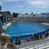 Огромный аквариум Shamu Stadium, где проходит самое знаменитое шоу c участием касаток